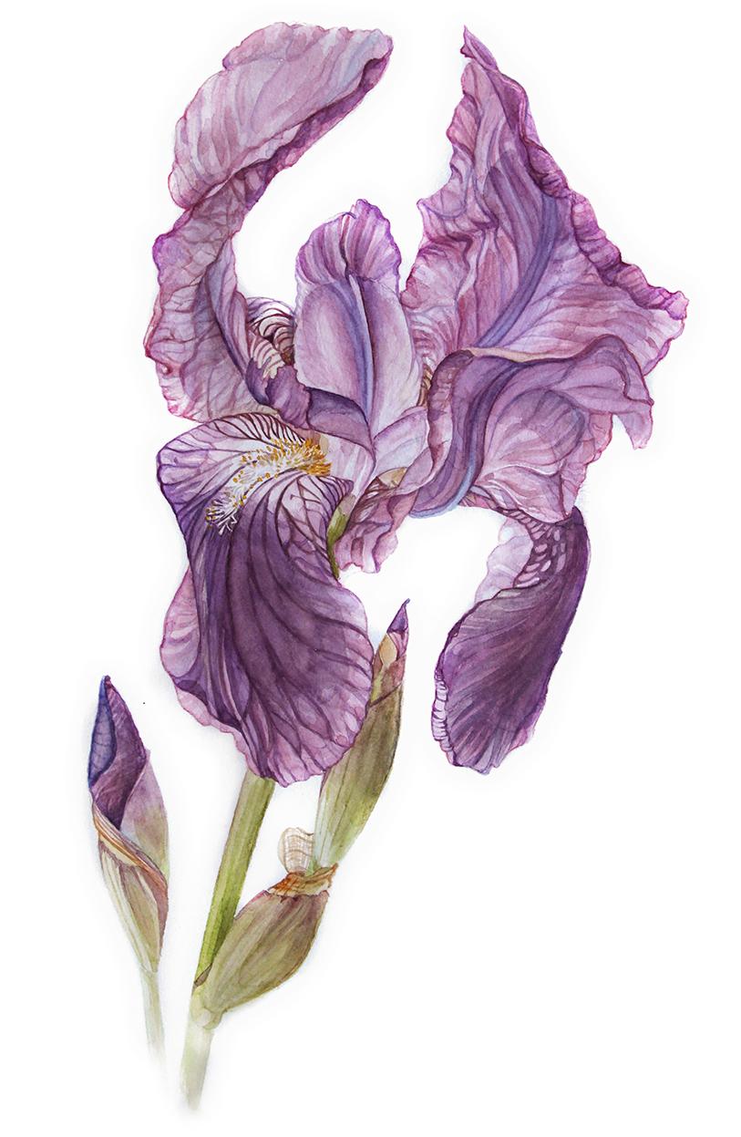 Helena Zingarella ~ Art for the Heart