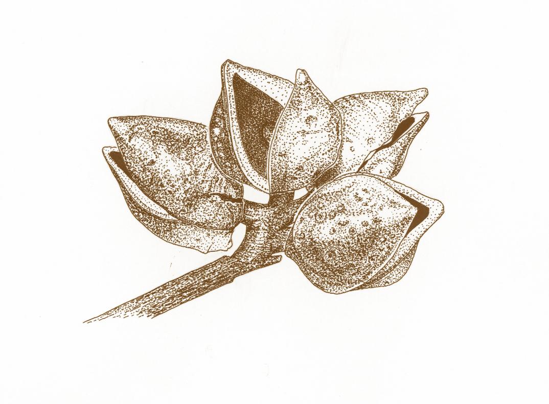 pünktli pflanze